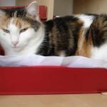 Büro-Katze in Ablage K bei Texterin Köln