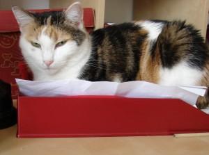 Home Office – arbeiten mit der Katz'