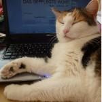 Texte Lektorat PR Köln Das gepflegte Wort Büro-Katze