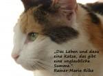 Kommentierte Katzen-Weisheit(en)